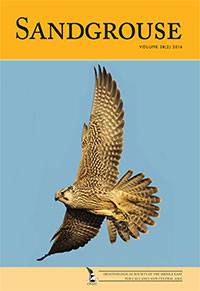 Sandgrouse Cover 38 (1)