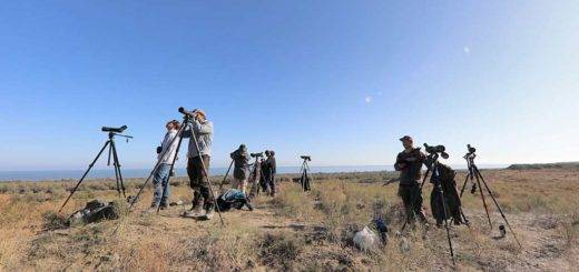Birders counting birds at Besh Barmag, Azerbaijan