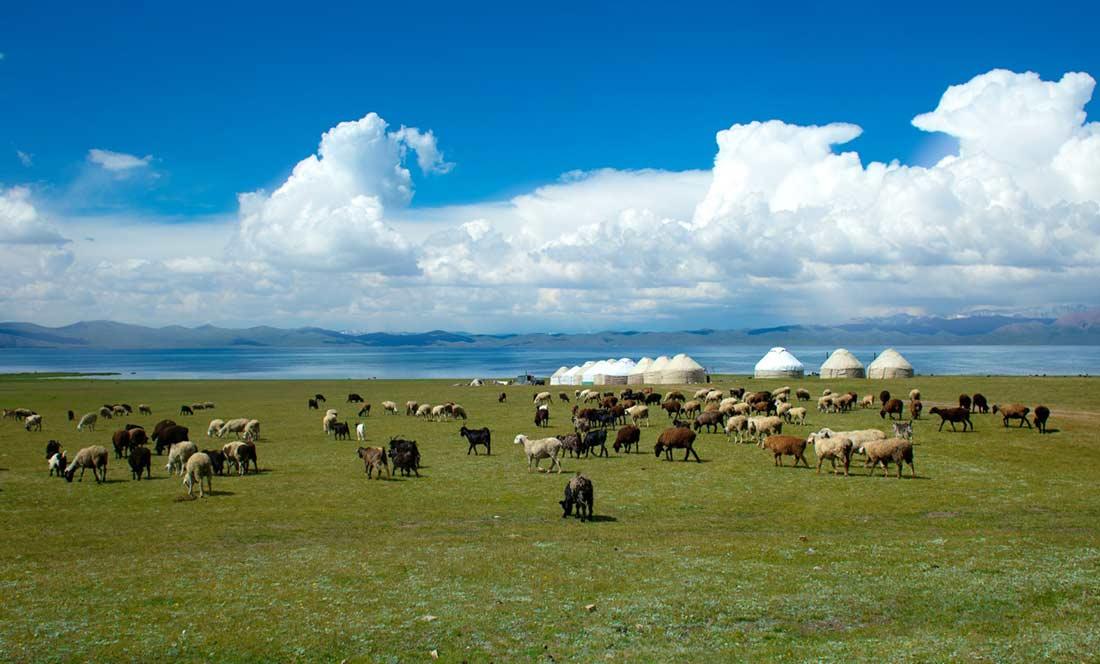 Summer grazing at Sonkul