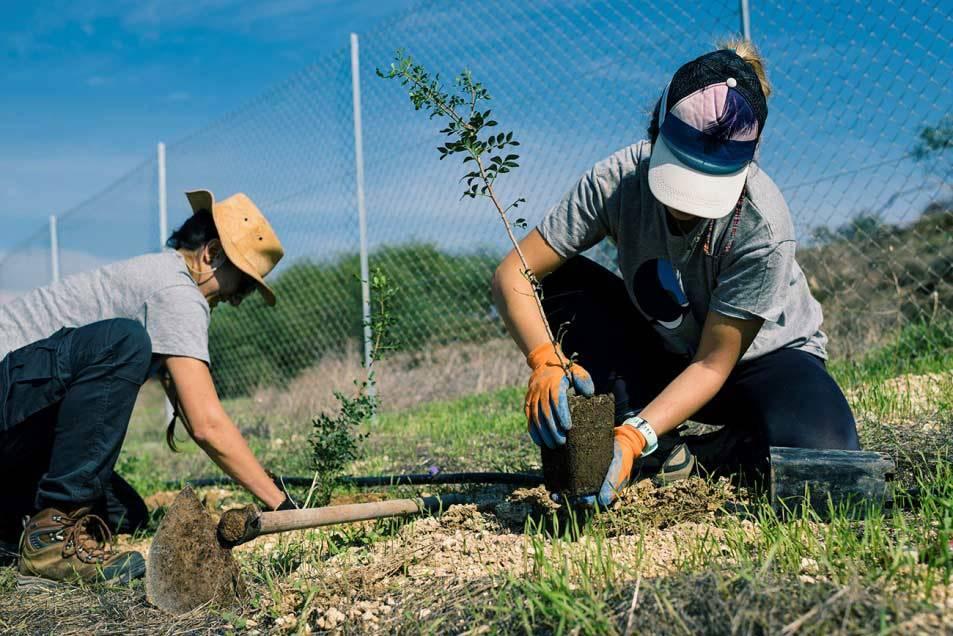 Tree planting on the new reserve. Silvio Rusmigo