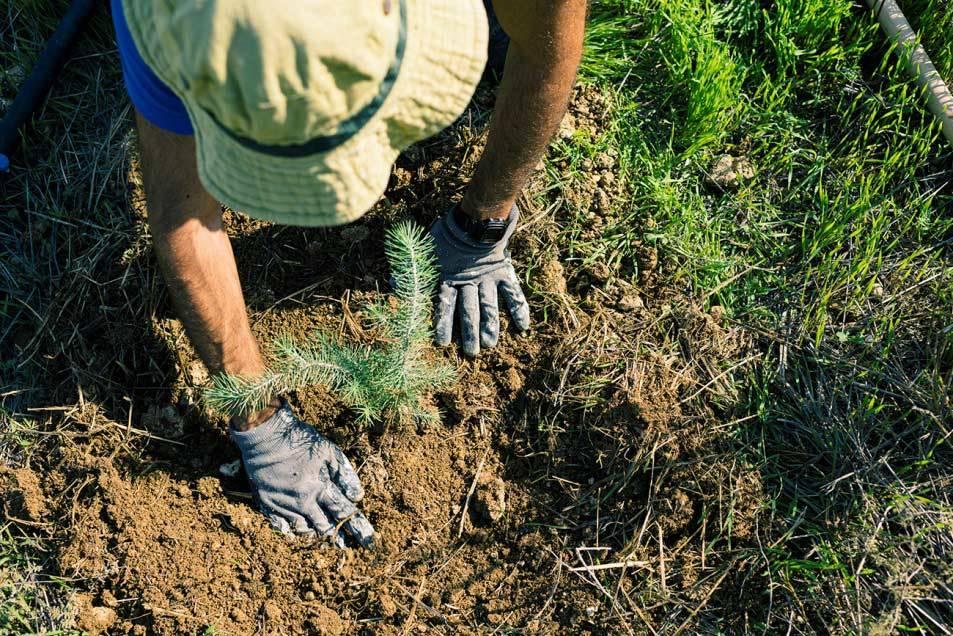 Tree planting. © Silvio Rusmigo